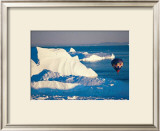 Illulissat Groenland Posters by Georges Bosio