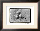 Sand Treasures V Print by Laura Denardo