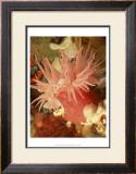 Graphic Sea Anemone I Art