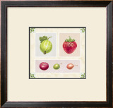 Antique Fruits Poster by Alex Bloch