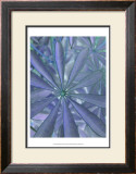 Woodland Plants in Blue II Prints by Sharon Chandler