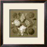Shell Collector Series IV Prints by Renee Stramel