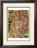 Woodland Plants in Red IV Prints by Sharon Chandler