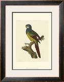 Crackled Antique Parrot IV Art by George Shaw