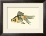 Telescope Goldfish Prints by S. Matsubara