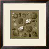 Shell Collector Series V Print by Renee Stramel