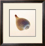 Fig Shell Prints by Tom Artin