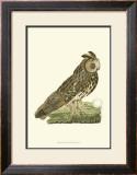 Owls III Posters by  Nozeman