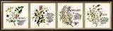 Kitchen Herbs II Art by G. Phillips