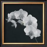 Orchid Illusion II Print by Katja Marzahn