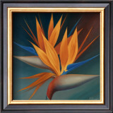 Bird of Paradise II Print by Vivien Rhyan