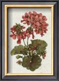 Fleur du Jour, Geranium Poster by Jerianne Van Dijk