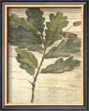Weathered Oak Leaves II Posters by Gerard Paul Deshayes