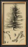 Arbor Study VI Poster
