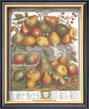 Twelve Months of Fruits, 1732, January Posters by Robert Furber