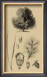 Arbor Study V Prints
