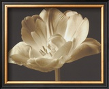 Champagne Tulip III Prints by Charles Britt