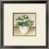 White Jasmine Poster by Galley 