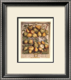 Fruits of the Season, Spring Prints by Robert Furber