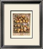 Fruits of the Season, Spring Prints by Robert Furber