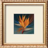 Bird of Paradise II Prints by Vivien Rhyan