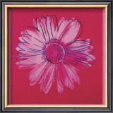 Daisy, c.1982  (crimson and pink) Posters by Andy Warhol