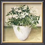 White Jasmine Prints by  Galley