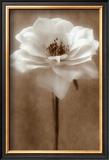 Antique Rose Posters by Christine Zalewski