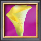 Lily Bloom VIII Print by Bill Philip