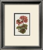Fleur du Jour, Geranium Print by Jerianne Van Dijk