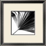 Black and White Palms II Art by Jason Johnson