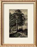 Wild Pine Prints by Ernst Heyn