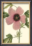 Hibiscus II Art by  Cooke