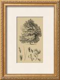 Arbor Study IV Print