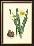 Yellow Narcissus II Prints by  Van Houtt
