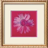 Daisy, c.1982  (crimson and pink) Art by Andy Warhol