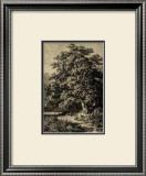 Oak Tree Poster by Ernst Heyn