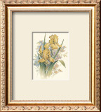 Yellow Iris Prints by T. C. Chiu