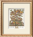 Twelve Months of Fruits, 1732, June Prints by Robert Furber