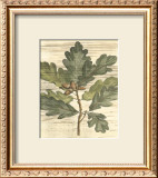 Weathered Oak Leaves I Prints by Gerard Paul Deshayes