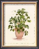 Ivy in a Clay Pot Posters by Cappello