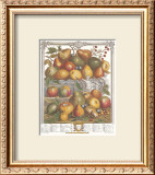 Twelve Months of Fruits, 1732, January Prints by Robert Furber