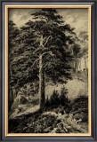 Wild Pine Print by Ernst Heyn