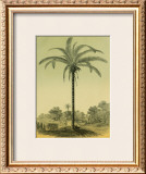 Astrocaryum Palm Prints by Ch. Lemaire