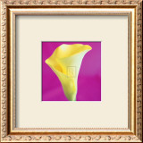 Lily Bloom VIII Prints by Bill Philip