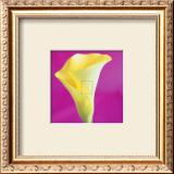 Lily Bloom VIII Prints by Bill Philip