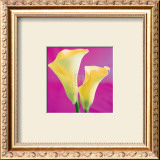 Lily Bloom VII Print by Bill Philip