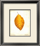 Beech Leaf Prints by Meg Page