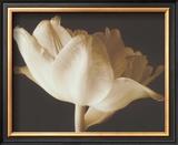 Champagne Tulip IV Print by Charles Britt