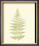 Lowes Fern V Prints by Edward Lowe